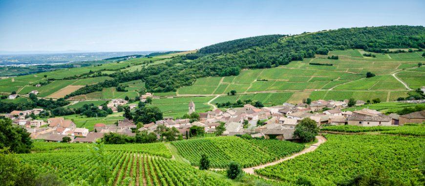 Le strade dei vini francesi, itinerari di gusto